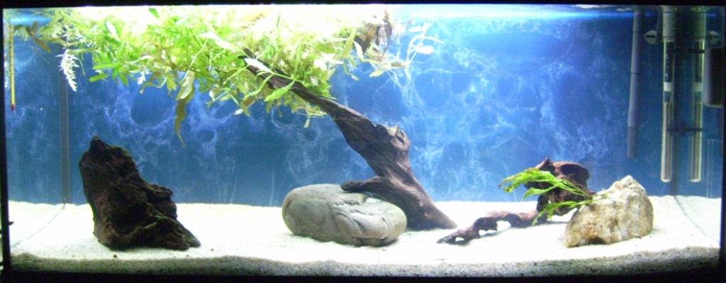 Meilleur Decoration Aquarium  Litres